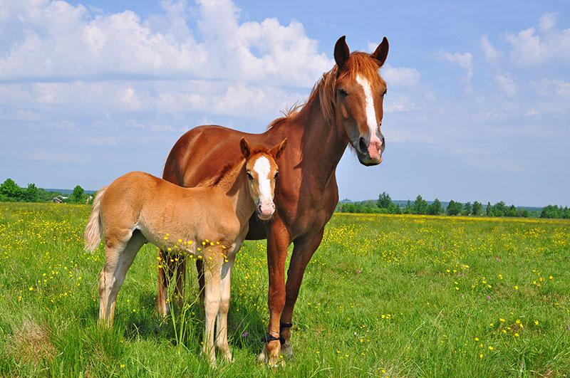Uitz Pferdefutter
